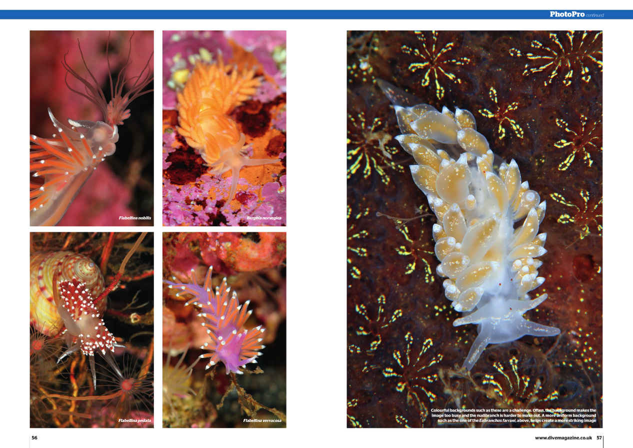 Dive Nudibranchs 2